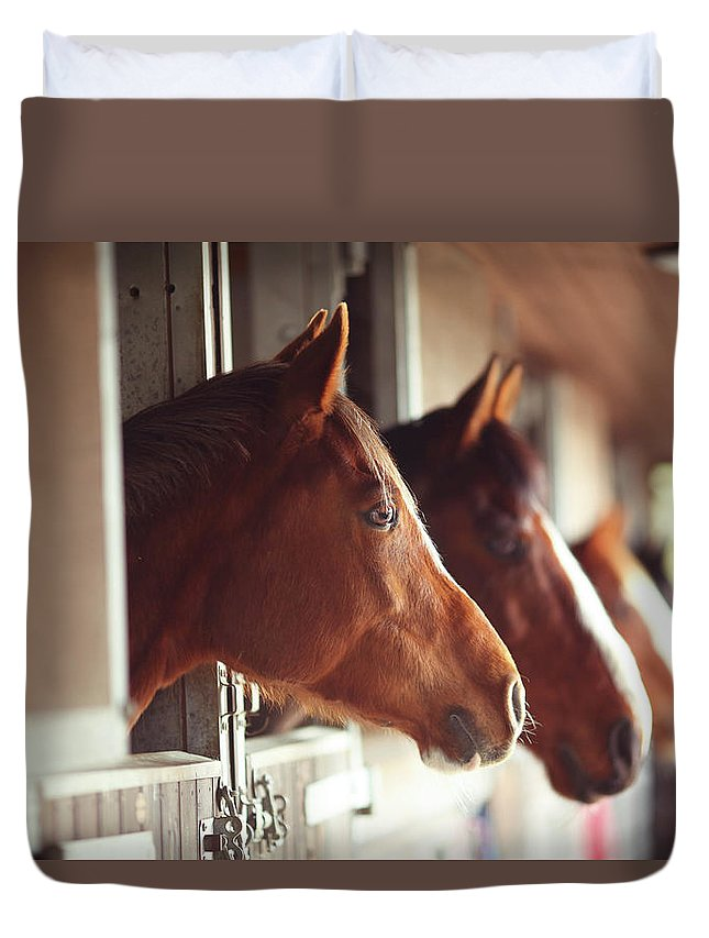Horse Duvet Cover featuring the photograph Four Horses In Stables by Olivia Bell Photography