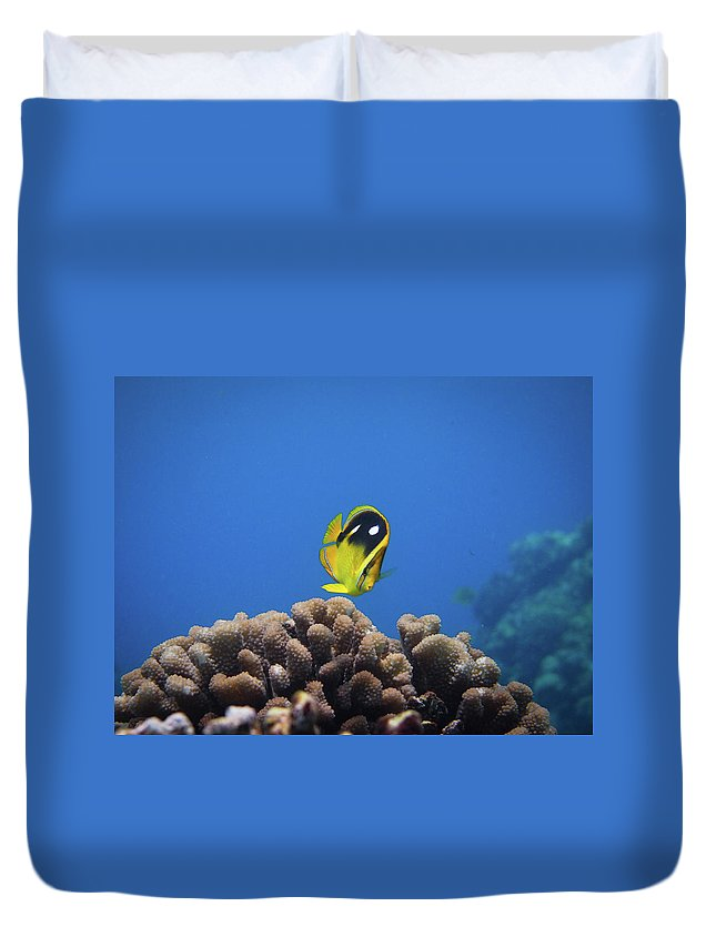 Underwater Duvet Cover featuring the photograph Four Spot Butterfly by Taiki Sakai