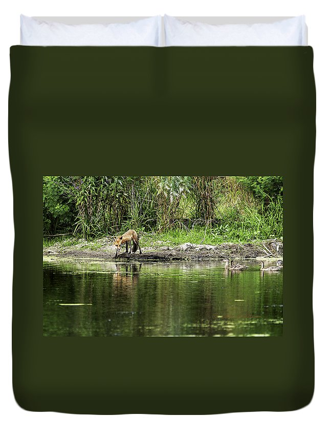 Heron Heaven Duvet Cover featuring the photograph Fox At Water Hole by Edward Peterson