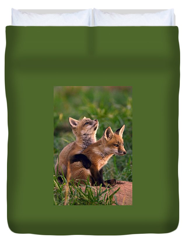 Fox Duvet Cover featuring the photograph Fox Cub Buddies by William Jobes