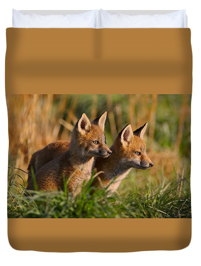 Fox Duvet Cover featuring the photograph Fox Cubs At Sunrise by William Jobes