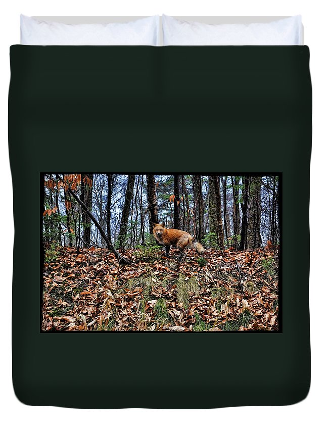 Fox Duvet Cover featuring the photograph Fox by Jes Fritze