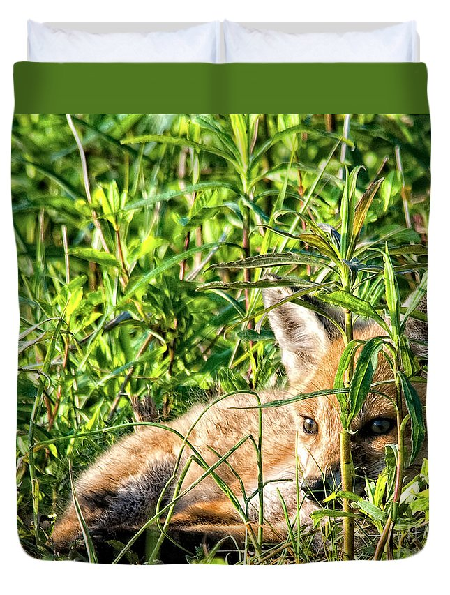 Fox Duvet Cover featuring the photograph Red Fox Pup Hiding by Timothy Flanigan and Debbie Flanigan Nature Exposure