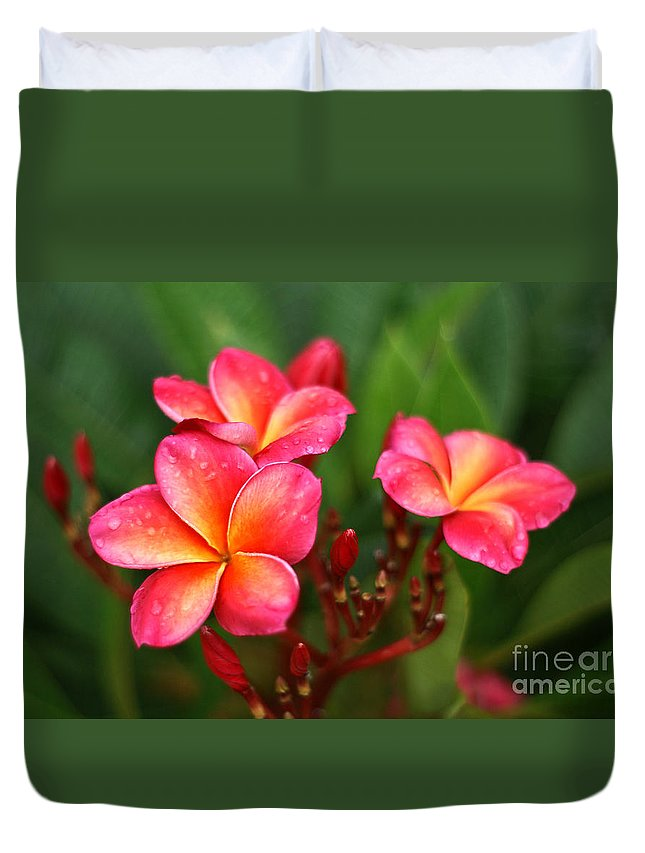 Frangipani Duvet Cover featuring the photograph Frangipani Trio by Sher Stoll