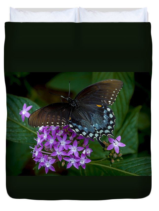 Butterfly Duvet Cover featuring the photograph Freckles by Louis Rivera