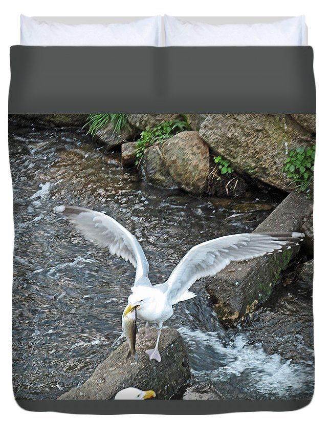 Seagull Duvet Cover featuring the photograph Fresh Catch Of The Day by Barbara McDevitt