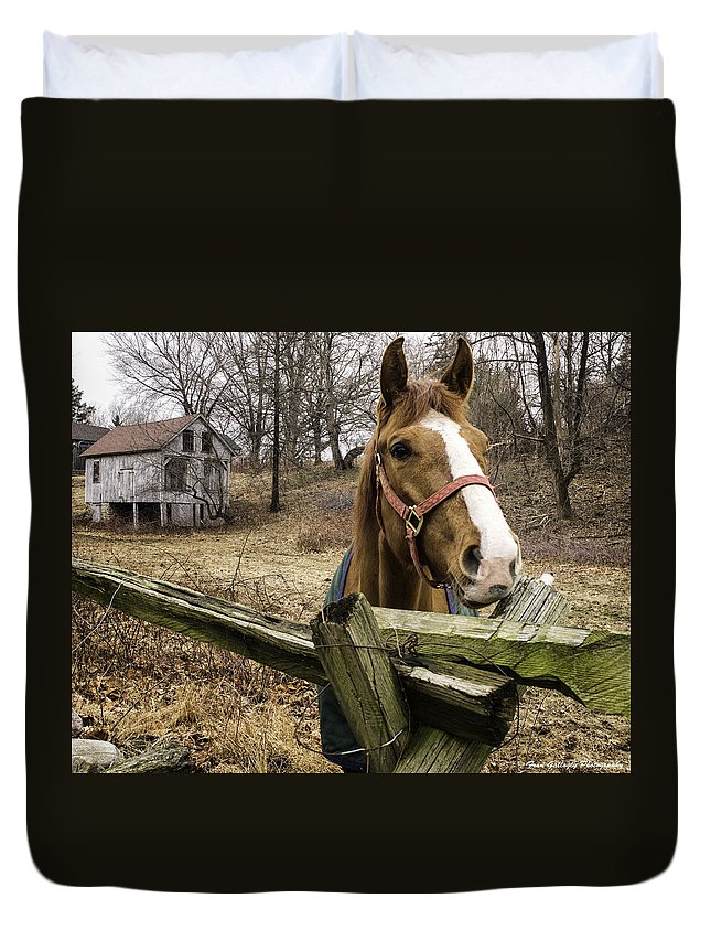 Horse Duvet Cover featuring the photograph Friendly Horse by Fran Gallogly