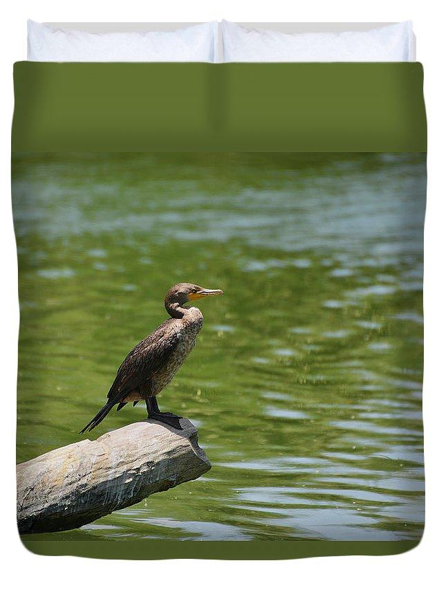 Frigatebird Duvet Cover featuring the photograph Frigate bird watching estuary by Alexandra Till