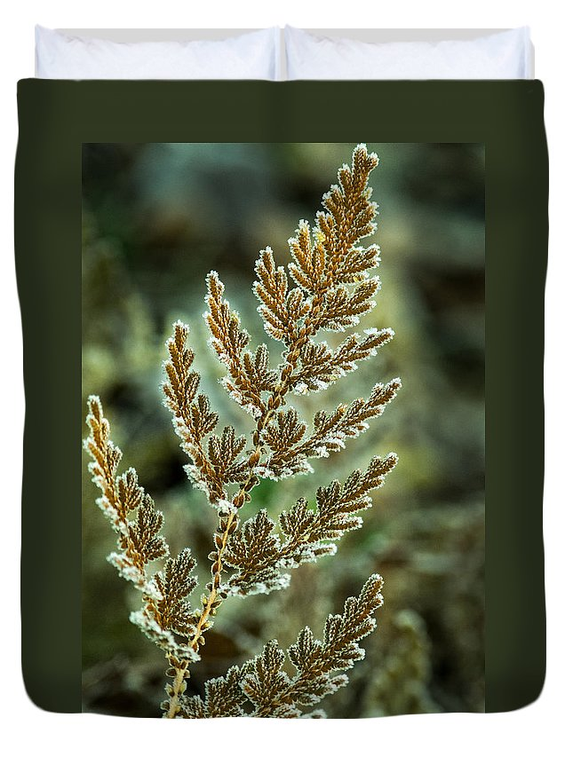 Frosted Duvet Cover featuring the photograph Frosted Fern by Douglas Barnett