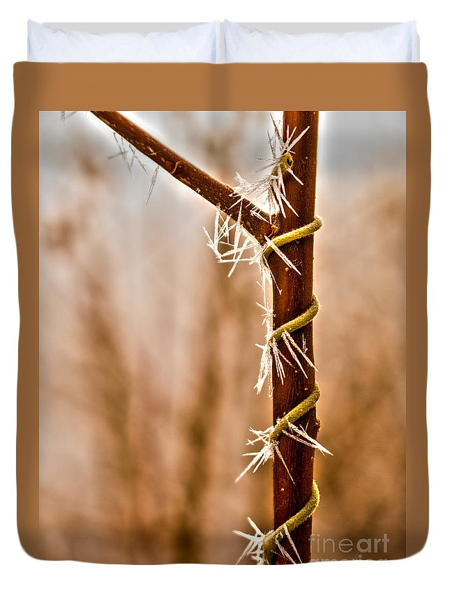 Background Duvet Cover featuring the photograph Frozen Spiral Vine by Andrea Goodrich