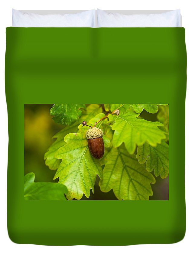Acorn Duvet Cover featuring the photograph Fruit Of An Oak Tree Ripe In Autumn by U Schade