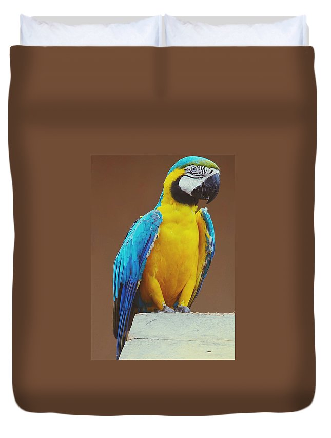 Macaw Duvet Cover featuring the photograph Full Length Of Blue And Yellow Macaw by Hans Dyckerhoff / Eyeem