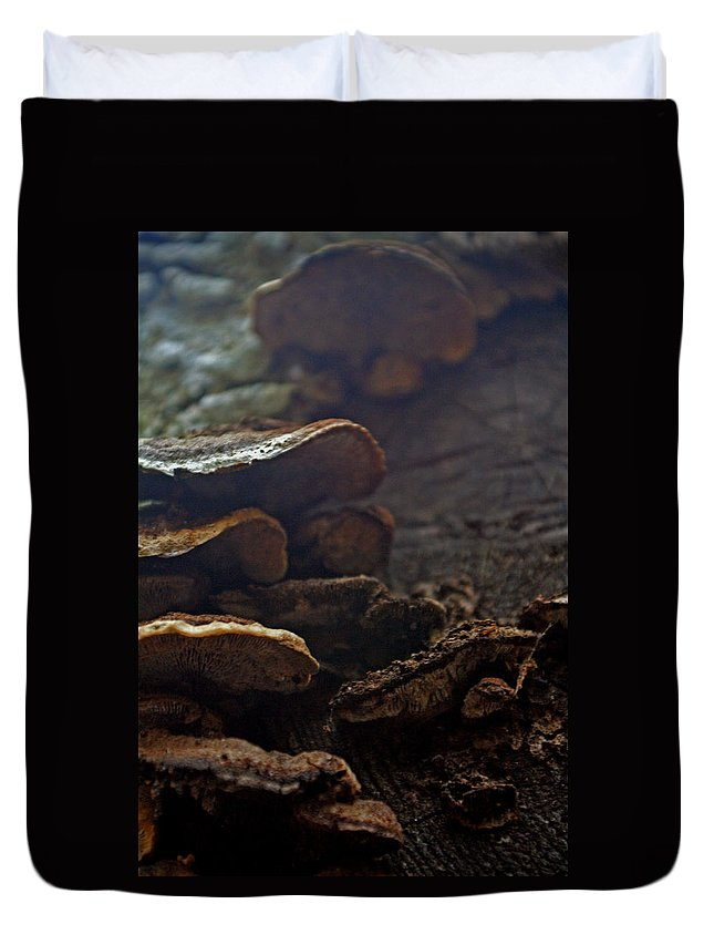 Fungus Duvet Cover featuring the photograph Fungus 11 by Allan Lovell