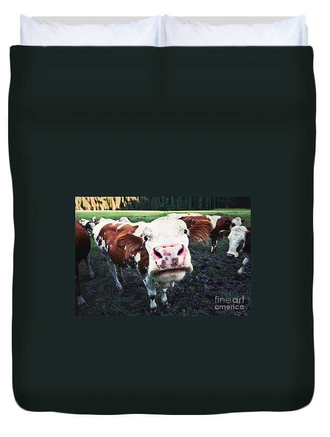 Animal Duvet Cover featuring the photograph Say Hi by JR Photography