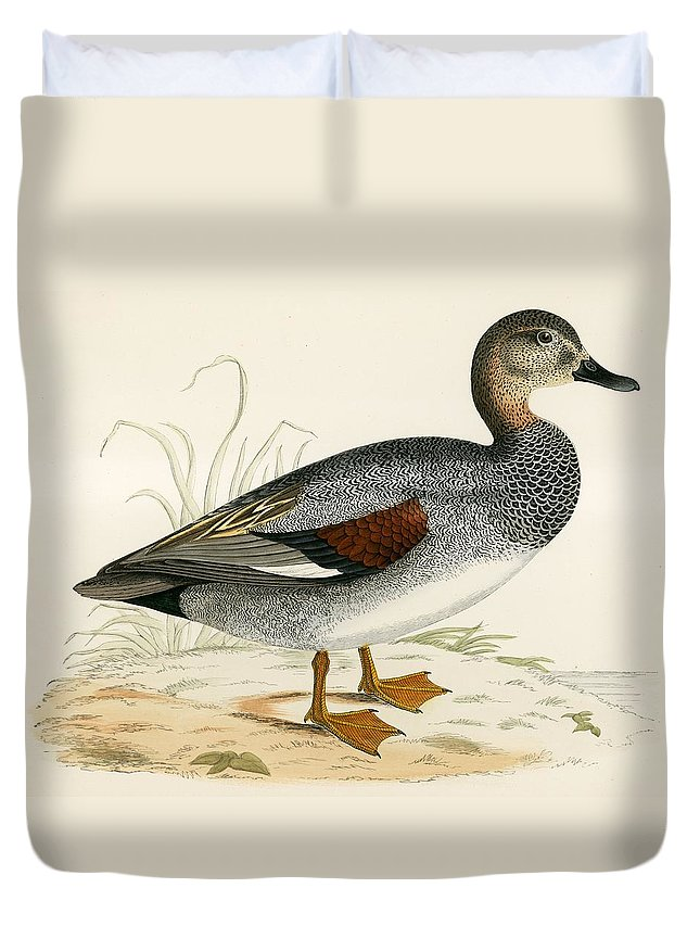 Birds Duvet Cover featuring the painting Gadwall by Beverley R Morris