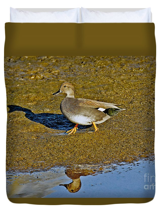 Animal Duvet Cover featuring the photograph Gadwall Drake On Mudflat by Anthony Mercieca