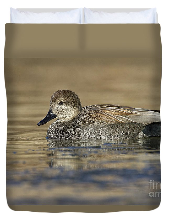 Gadwall Duvet Cover featuring the photograph Gadwall On Icy Pond by Bryan Keil