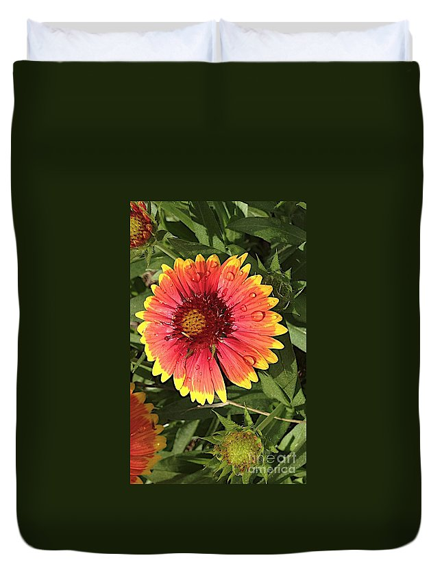Flowers Duvet Cover featuring the photograph Gaillardia by Joseph Yarbrough