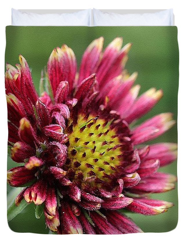 Mccombie Duvet Cover featuring the painting Gaillardia Pulchella Named Sundance Bicolor by J McCombie
