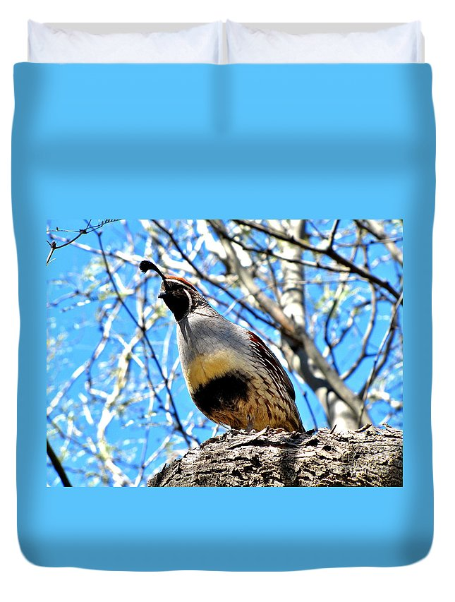 Gambel's Quail Duvet Cover featuring the photograph Gambel's Quail II by Marilyn Smith