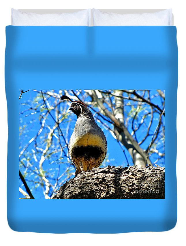 Gambel's Quail Duvet Cover featuring the photograph Gambel's Quail by Marilyn Smith