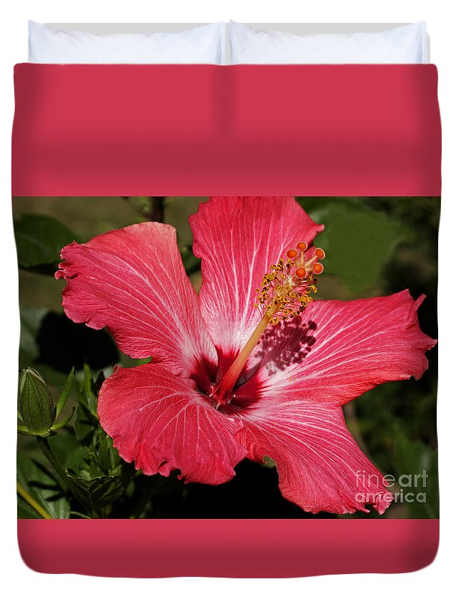 Hibiscus Duvet Cover featuring the photograph Garden Beauty by Ann Horn