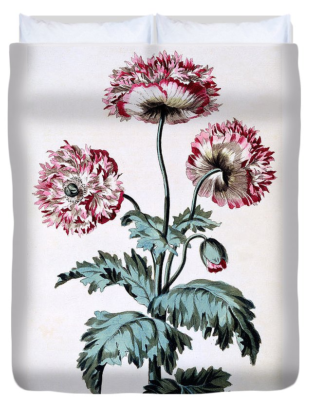Still-life Duvet Cover featuring the painting Garden Poppy With Black Seeds by John Edwards