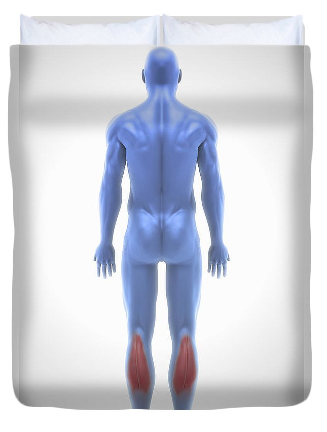 Calves Duvet Cover featuring the photograph Gastrocnemius Muscle by Science Picture Co