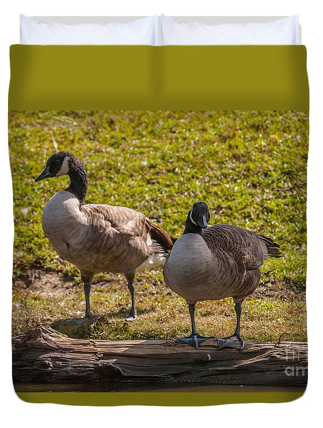 Goose Duvet Cover featuring the photograph Geese On A Log by Dale Powell