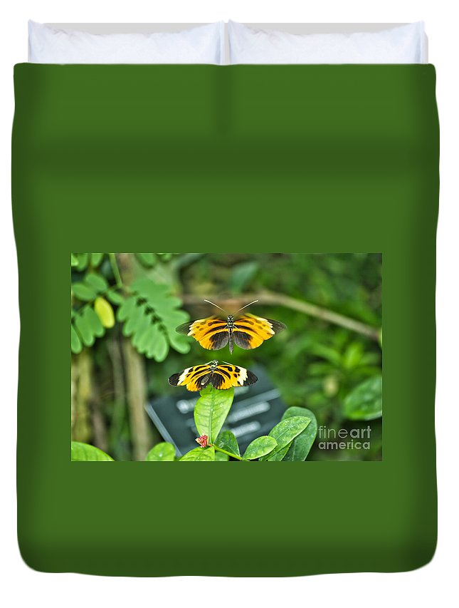 Il Duvet Cover featuring the photograph Gentle Butterfly Courtship 01 by Thomas Woolworth