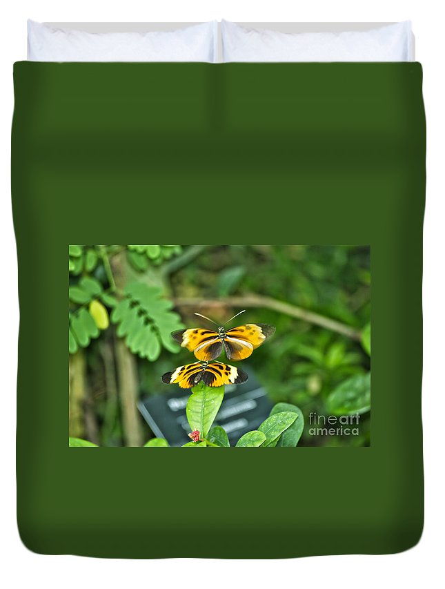 Mating Duvet Cover featuring the photograph Gentle Butterfly Courtship 02 by Thomas Woolworth