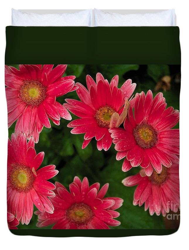 Pink Duvet Cover featuring the photograph Gerber Daisies Cluster by William Norton