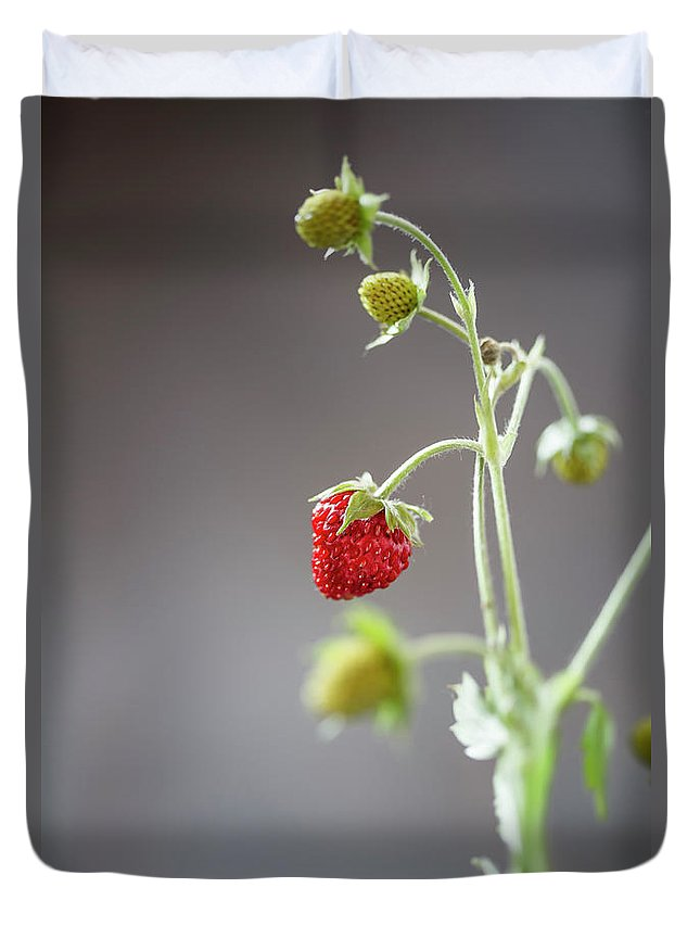 Wild Strawberry Duvet Cover featuring the photograph Germany, Baden Wuerttemberg, Wild by Westend61