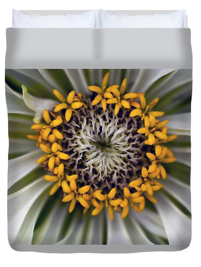 Outdoors Duvet Cover featuring the photograph Germany, Zinnia Flower, Close Up by Westend61