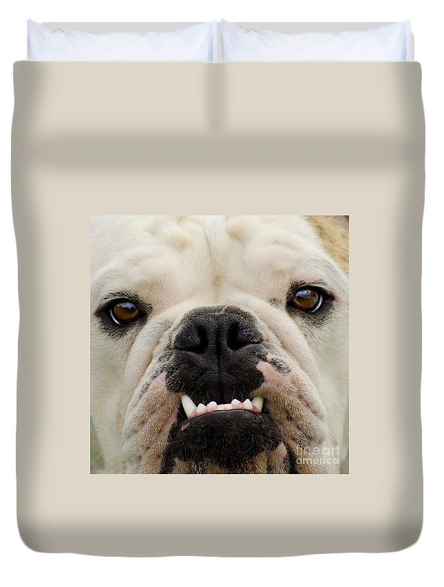 Dog Duvet Cover featuring the photograph Get A Load Of These by Linsey Williams