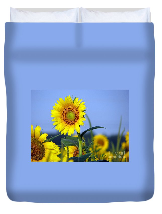 Sunflower Duvet Cover featuring the photograph Getting To The Sun by Amanda Barcon