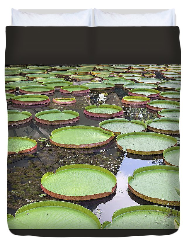 Amazonian Duvet Cover featuring the photograph Giant Amazonian Water Lily Pads by Jit Lim