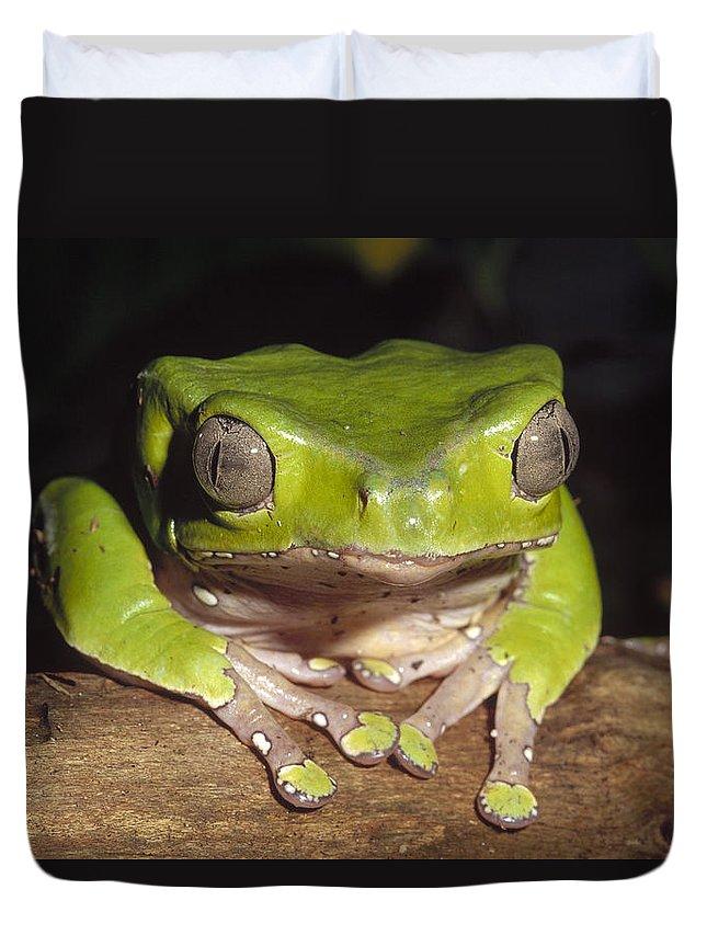 Feb0514 Duvet Cover featuring the photograph Giant Monkey Frog Venezuela by Gerry Ellis