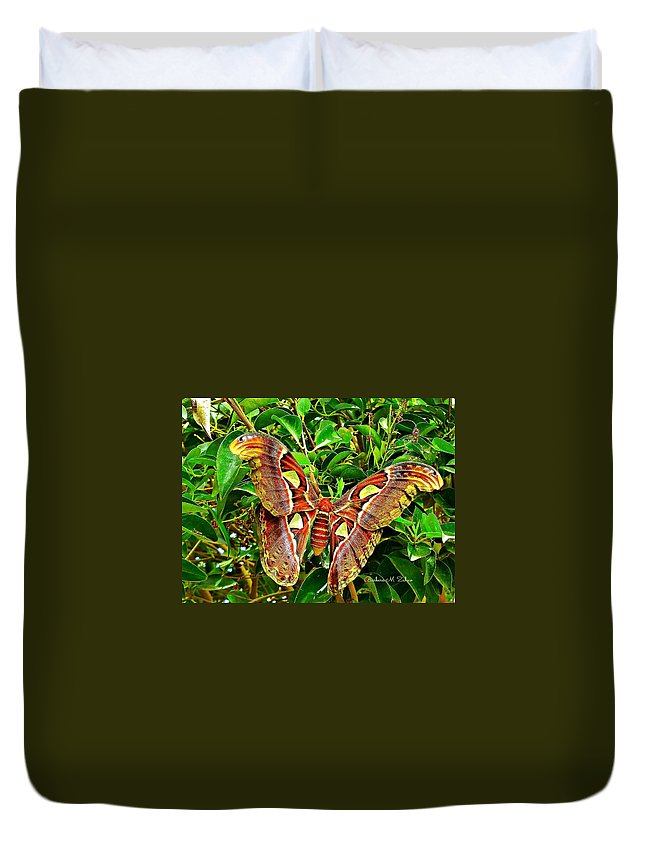 Butterflies Duvet Cover featuring the photograph Giant Moth by Barbara Zahno