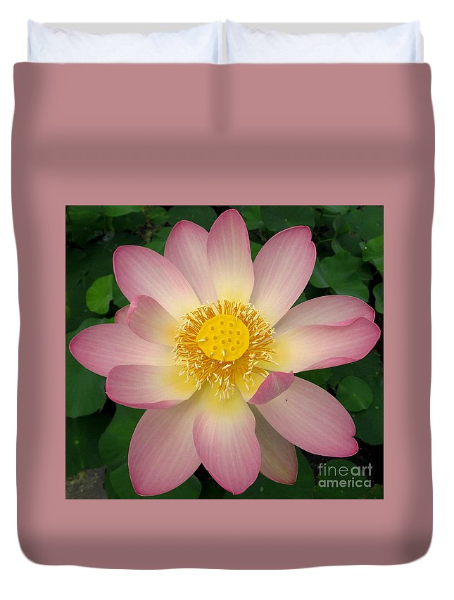 Giant Pink Lotus Flower Duvet Cover featuring the photograph Giant Pink Lotus by Joshua Bales