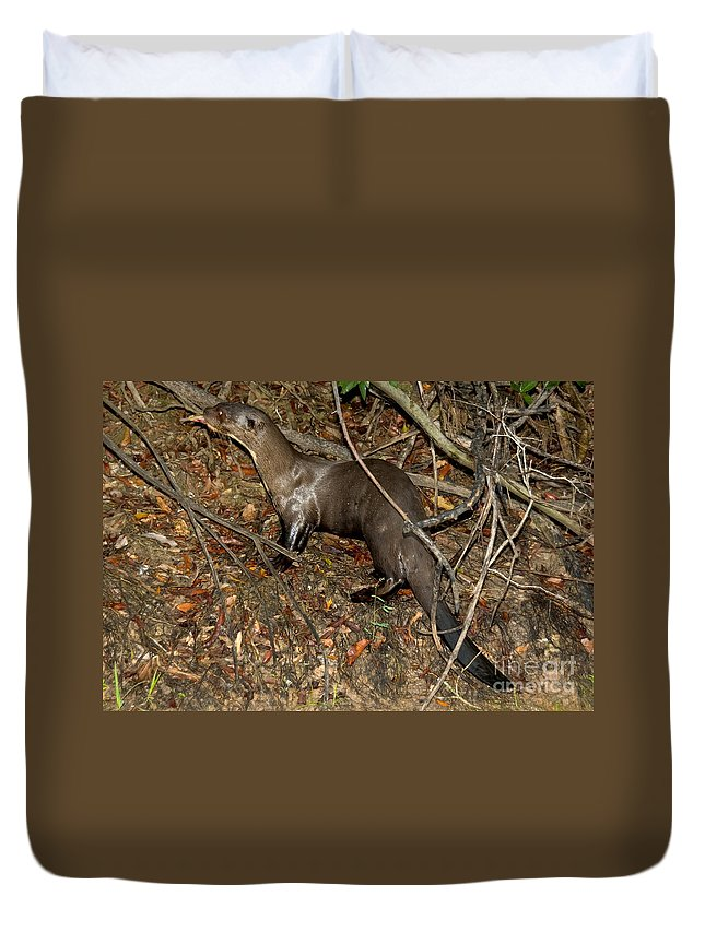Giant River Otter Duvet Cover featuring the photograph Giant River Otter by Gregory G. Dimijian, M.D.