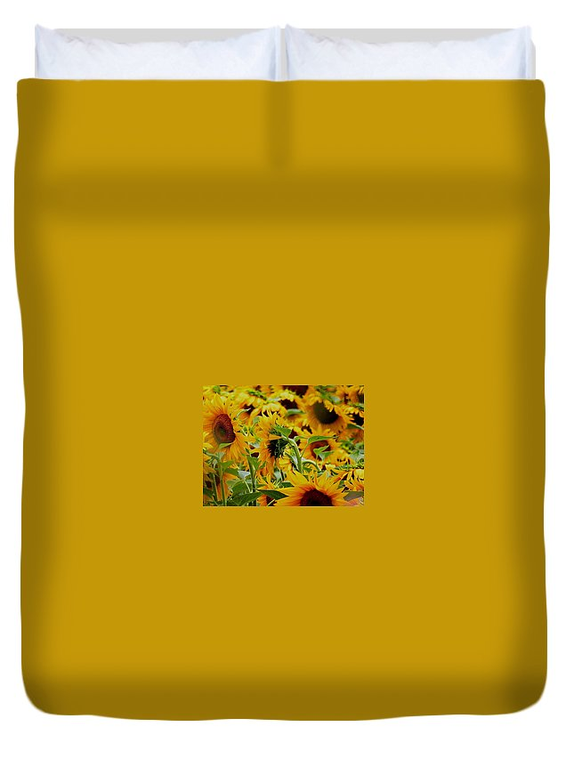 Duvet Cover featuring the photograph Giant Sunflowers by Nikki Keep
