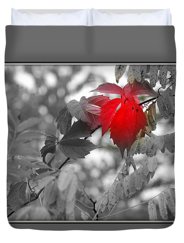 Red Leave Duvet Cover featuring the photograph Glimpse Of Autumn Red by Sheryl Mayhew