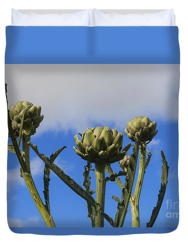 Agriculture Duvet Cover featuring the photograph Globe Artichokes by Diane Macdonald