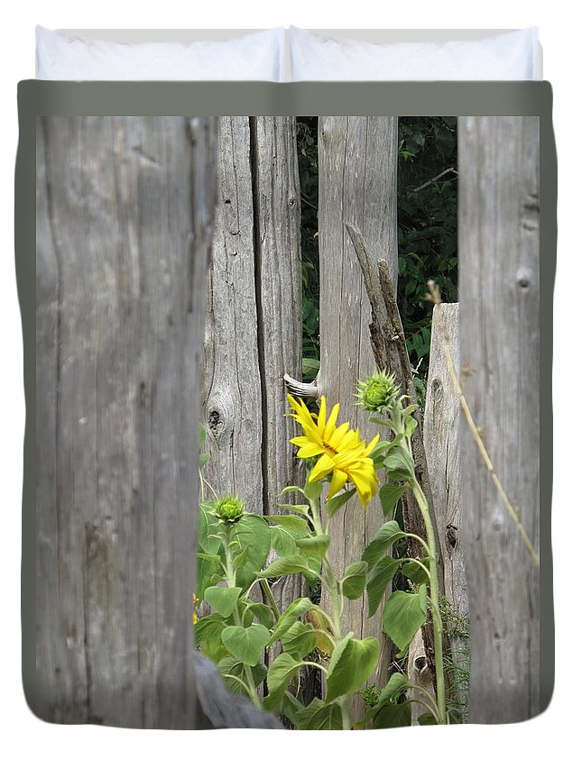 Sunflower Duvet Cover featuring the photograph Gloria's Favorite by Barbara McDevitt
