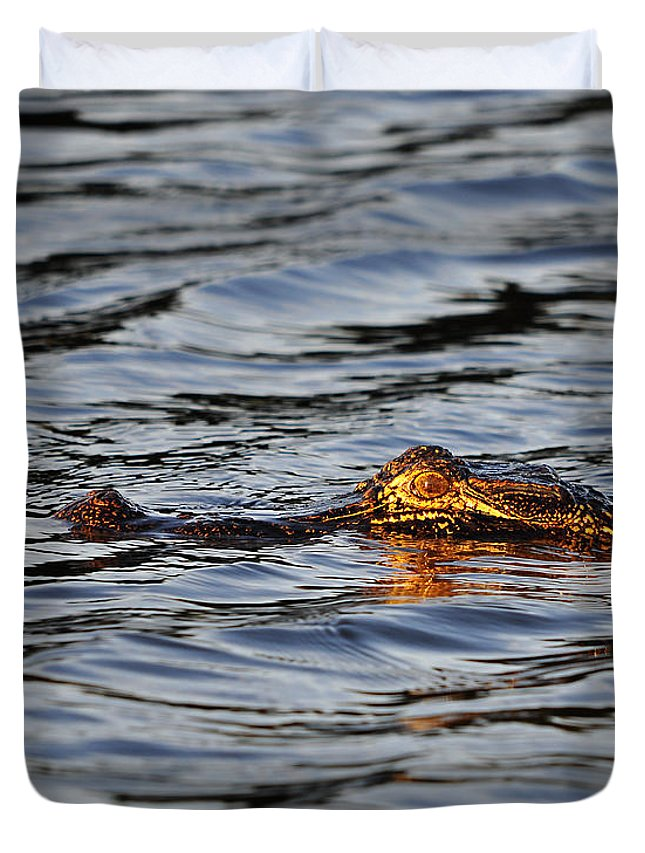 Alligator Duvet Cover featuring the photograph Glowing Gator by Al Powell Photography USA