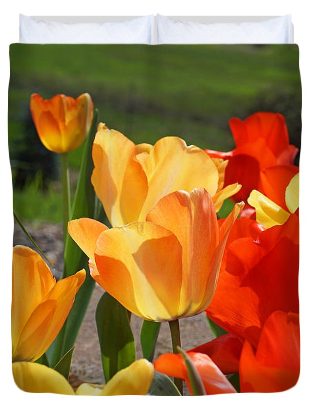 Red Duvet Cover featuring the photograph Glowing Sunlit Tulips Art Prints Red Yellow Orange by Baslee Troutman