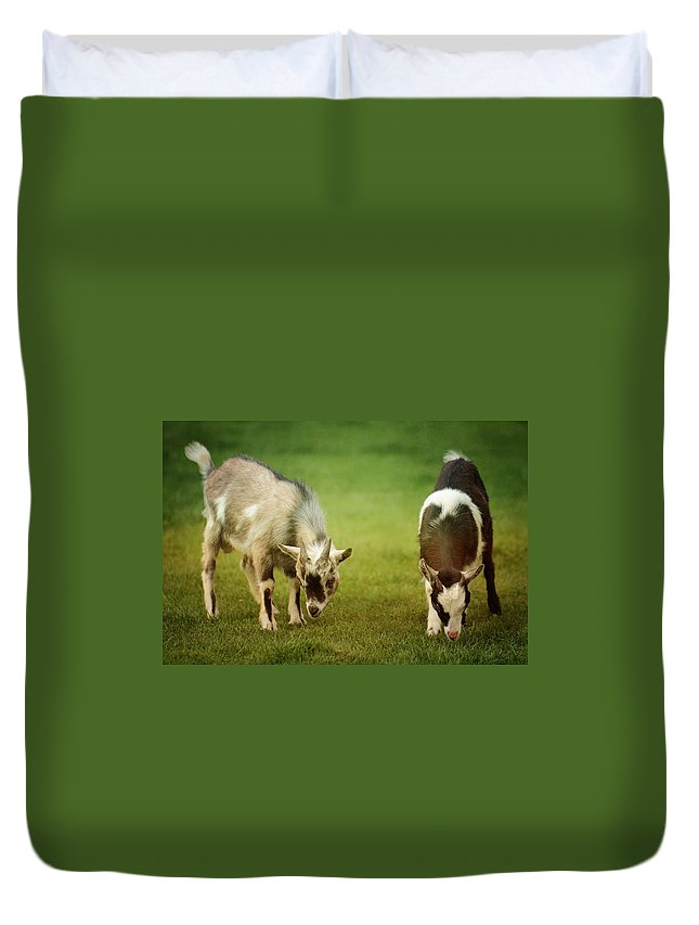 Animal Duvet Cover featuring the photograph Goat by Heike Hultsch