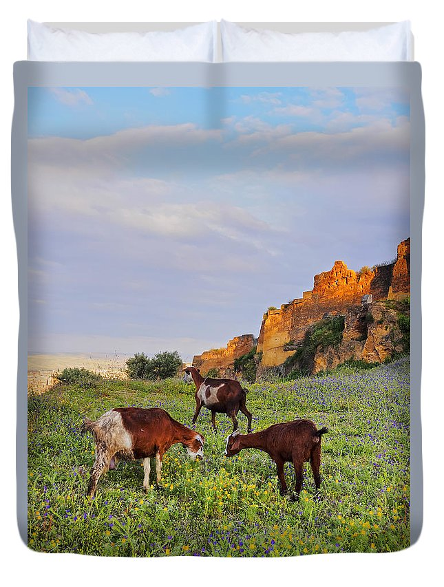 Africa Duvet Cover featuring the photograph Goats In Fes by Karol Kozlowski