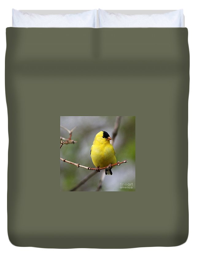 Finch Duvet Cover featuring the photograph Gold Finch by Lori Tordsen